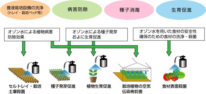 効果 オゾン 水